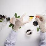 Magnolia Gardens Nursery Biotechnology Lab Cook Position